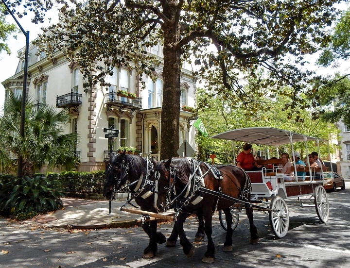 Savannah-Horse-Carriage-Tours