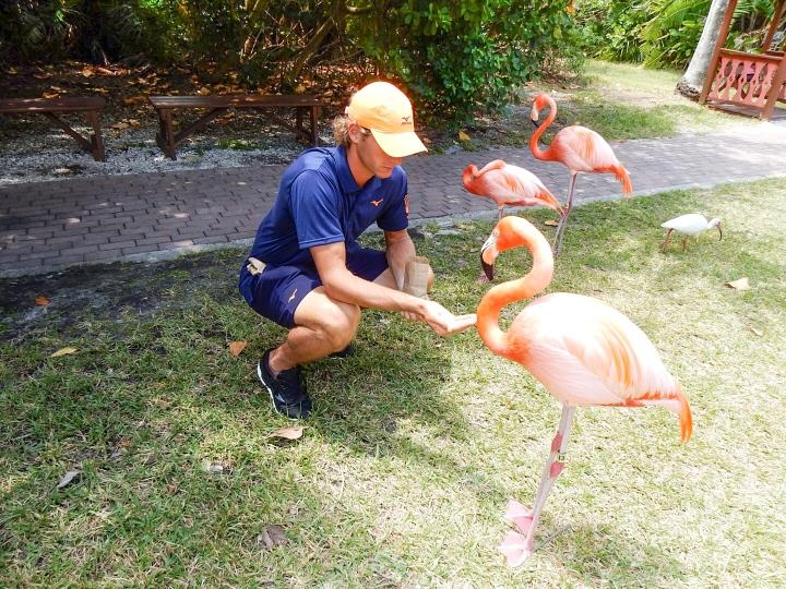 Sarasota-Jungle-Gardens