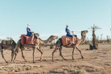 Camels-Marrakech