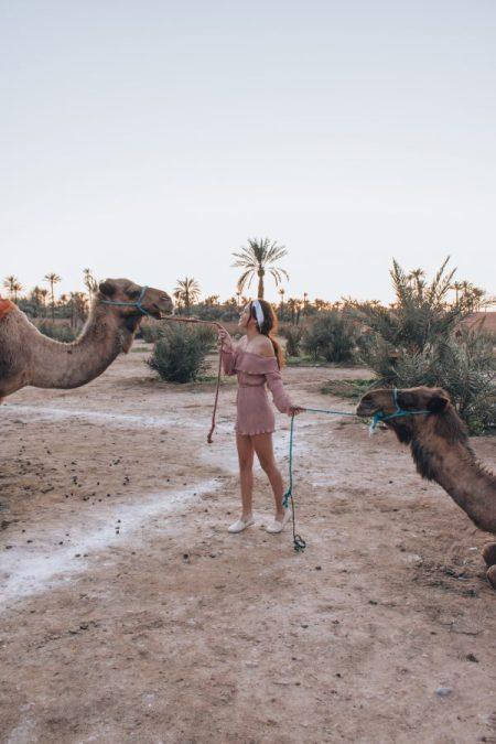 Cammels-Marrakech