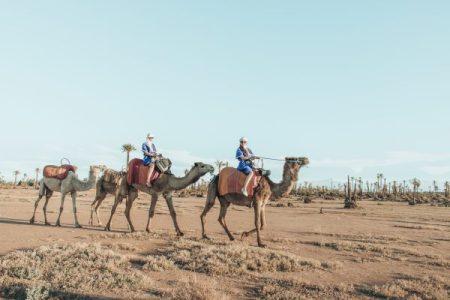 Marakech-Camel