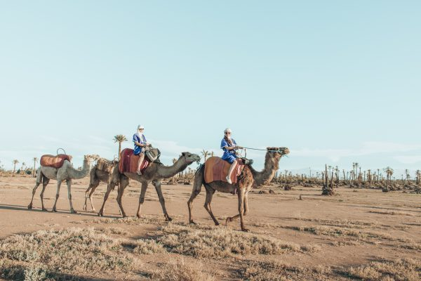 Marrakech Camel Ride Experience with TravelLinkMorocco